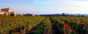 Vakantiewoning Côtes du Rhône